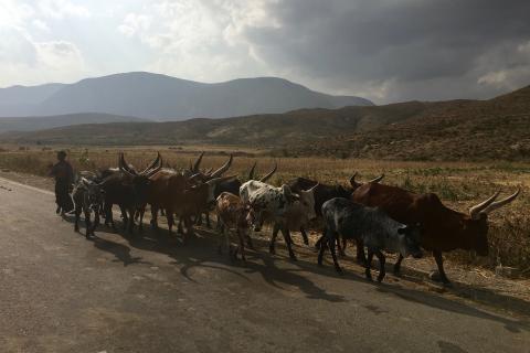 Land Portal and ILC Rangelands Initiative launch thematic portfolio on Rangelands, Drylands and Pastoralism