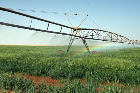 libya agriculture photo by Carsten ten Brink