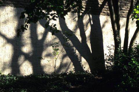 urbanization forest flickr