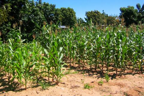 Flickr Zimbabwe agricultural land
