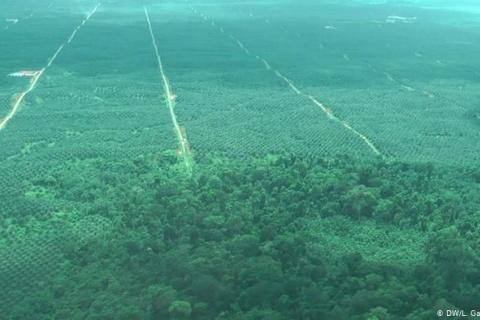 """""""¡Claro que sí podemos reforestar la Amazonía!"""""""