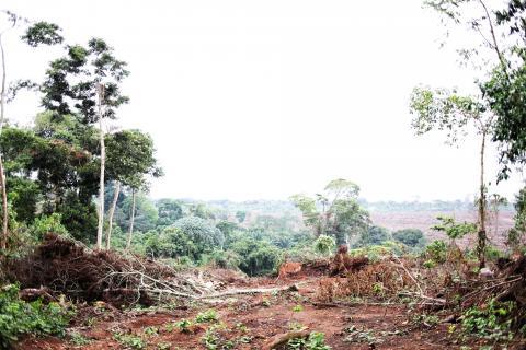 uganda land grabbing