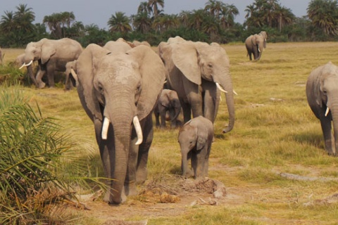 More Than 29,000 Acres Of Land Secured For Wildlife In Amboseli