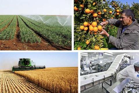 AgricultureAlgerie.jpg
