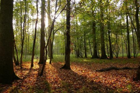 Crédit : Flickr - Baptiste MONSION Des arbres @Droits réservés