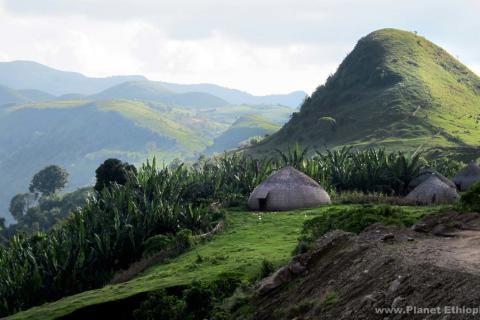 Floriculture : l'Ethiopie alloue 3.000 hectares aux investisseurs.jpg