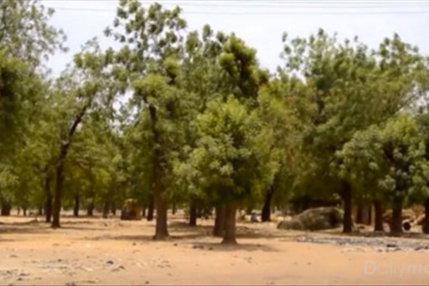 Ceinture_Verte_Niamey_2.jpg