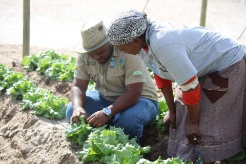 Climate Smart Horticulture Enhances Livelihoods in Botswana