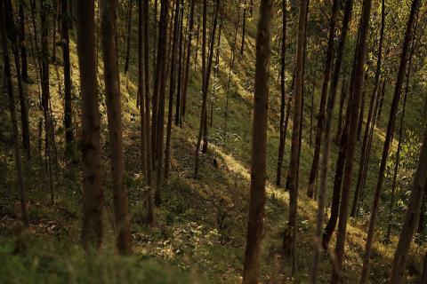 Forest, Uganda