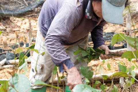 Planting in a nursery for forest restoration. CIFOR Photo/Lucy McHugh