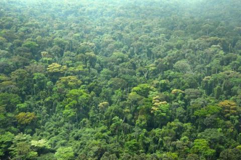 Forêt classée / © DR