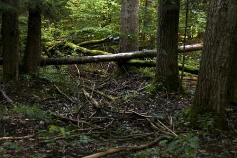 © AFP/Archives   La forêt de Bialowieza en Pologne, le 20 août 2010