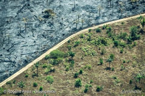 Área desmatada e queimada para conversão em pasto, em Rondônia, próximo à capital Porto Velho. Imagem de agosto de 2016 (© Rogério Assis / Greenpeace)