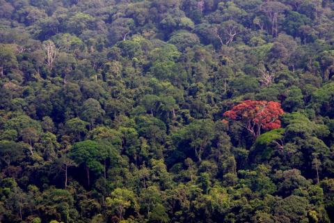 Gabon-751.jpg