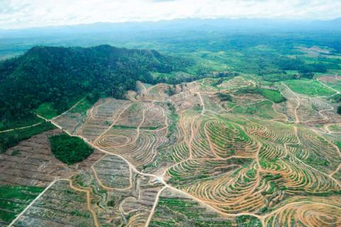 Lost forests: an aerial photograph shows land cleared for a palm oil plantation in West Kalimantan, Indonesia. Photo: Romeo Gacad