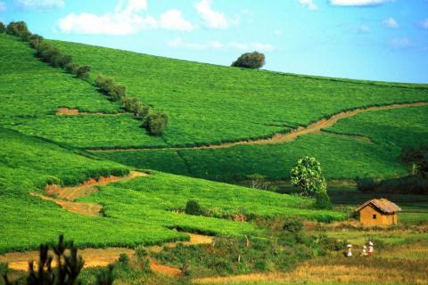 Réforme foncière à Madagascar