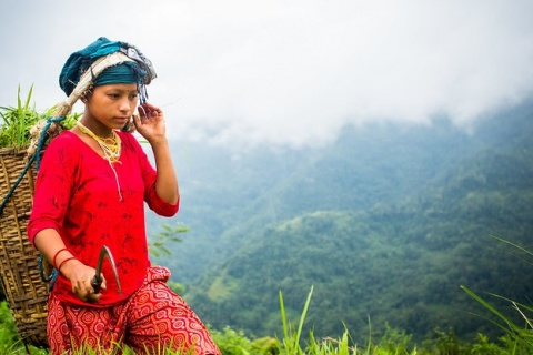 Shanti Tamang works in a field in Besisahar, Pashchimanchal, Nepal. CIFOR/Mokhamad Edliadi