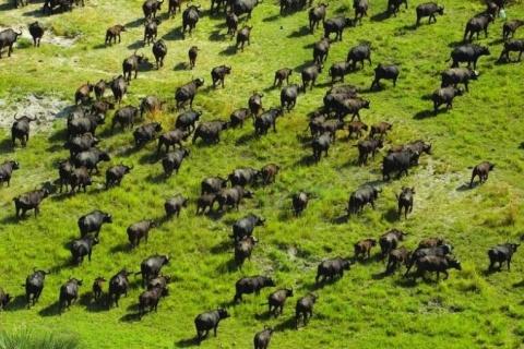 Okavango Delta (05/12/2007) . [File photo: Department of Wildlife and National Parks / Ian Johnson]