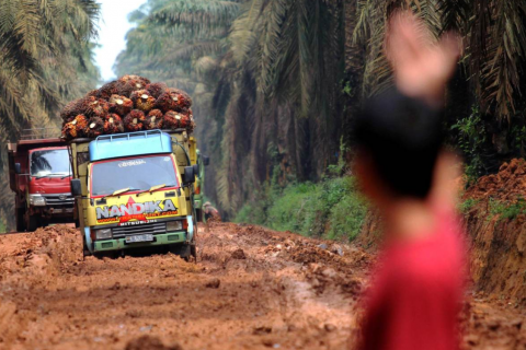 indonesia palm oil industries land conflict