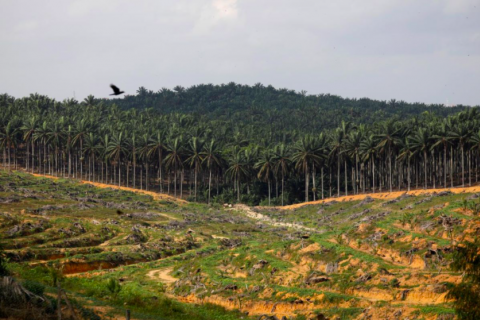 Malaysian Forestry Policy 2020 adopted at National Land Council Meeting
