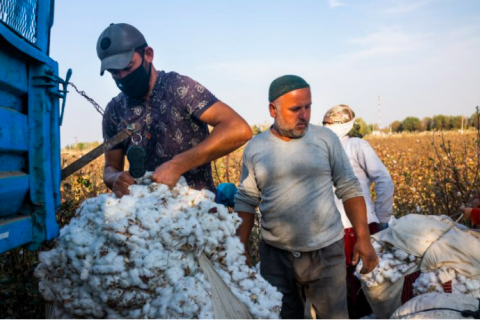Land-grabs – the new red flag for Uzbek cotton sector