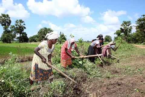Women working in a field  Women at work in Sri Lanka. Photo: Lakshman Nadaraja/World Bank