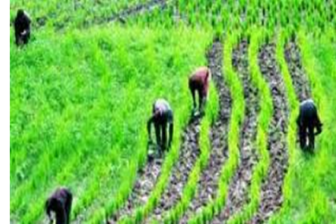 Private sector investments in Nigeria's agric sector