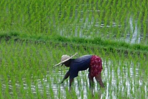 agriculture chine.jpg