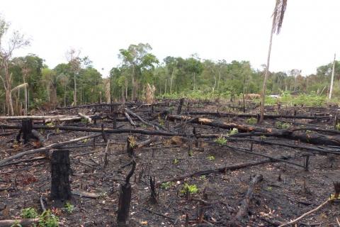 deforestation mali