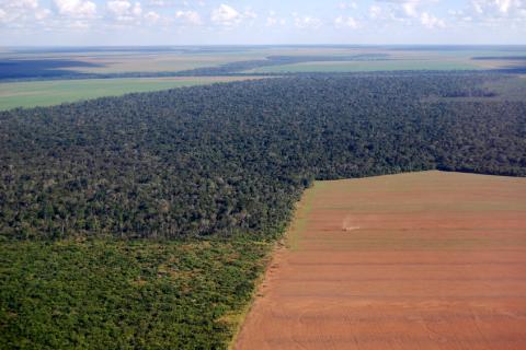 Os estados que registraram maior aumento da taxa de desmatamento foram Amazonas, Acre e Pará.   Foto: iStock by Getty Images