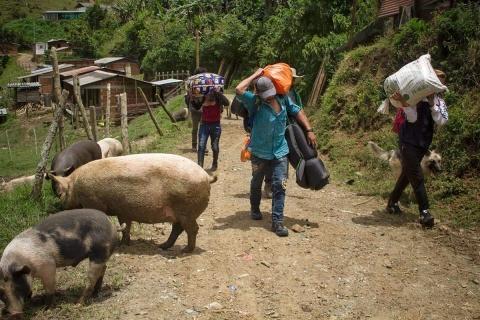 Desplazamiento Iguango Colombia Foto Fredy Henao