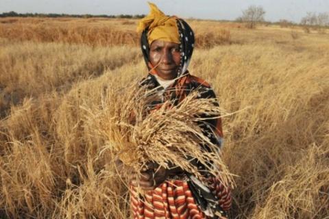 Moçambique precisa de U$D 103 milhões para assistência as vítimas da seca