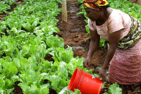 femme_agriculture_fao_0.jpag