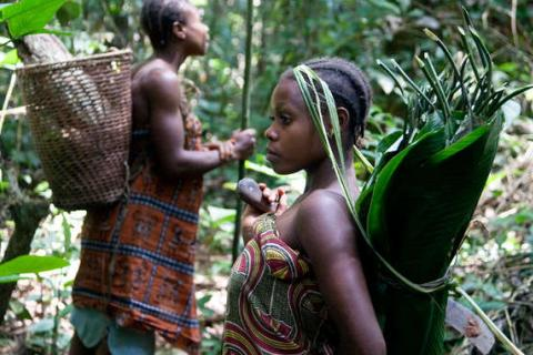 Traditionally, small 'Pygmy' communities moved frequently through forest territories, gathering a vast range of forest products, collecting and exchanging goods with neighboring settled societies. © Selcen Kucukustel/Atlas