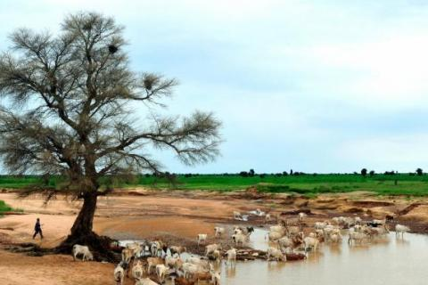 mauritanie-terre.jpg