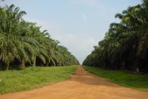 nigeria-okomu-oil-palm-entrevoit-une-baisse-du-volume-de-ses-ventes-en-2018.jpg