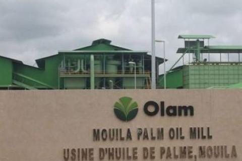 original_1411-12768-olam-revendique-une-production-de-8-866-tonnes-d-huile-de-palme-au-premier-semestre-2017_L.jpg