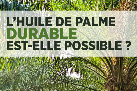 original_colloque_sur_lhuile_de_palme_-_laffiche.png