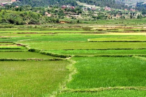 original_madagascar-arable-land.jpg