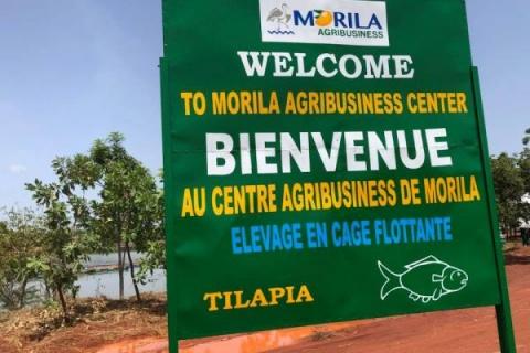 original_societe-Morila-miniere-agribusiness.jpg