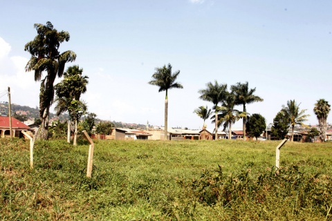 Land in Luzira. Owners of customary land can apply either individually or as an association, for conversion to freehold tenure. PHOTO/Rachel Mabala