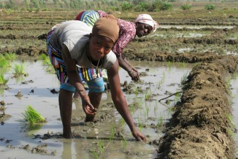 Women working in irrigated rice fields in Bagre, Burkina Faso © Global Water Initiative