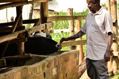 Njakasi at his cow shade. The retired agronomist practices zero grazing at his farm. He mainly keeps friesians. PHOTO/GEORGE KATONGOLE
