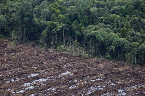 Desmatamento na Amazônia. (Getty Images/Getty Images)