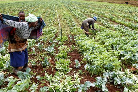 We cannot wait indefinitely – interim options for land reform