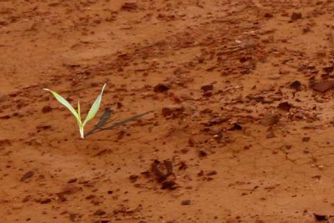soil_cle88ea19.jpg