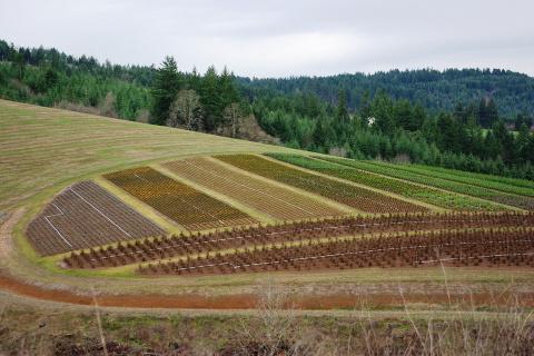 terre-agricole.jpg