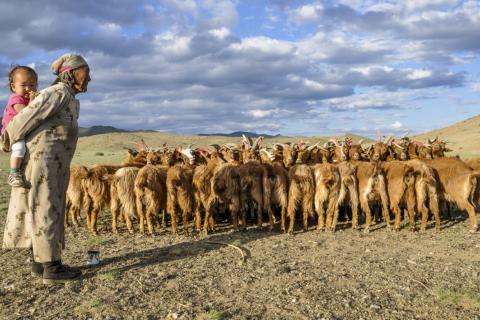 Goats getting ready for milking in the Khovd Province of Mongolia. Photo credit: © Eddie Game / The Nature Conservancy