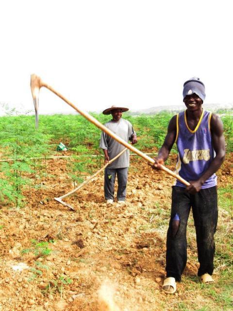 Foncier-Afrique.jpg