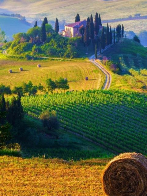 Italian-Agriculture-1132x670.jpg